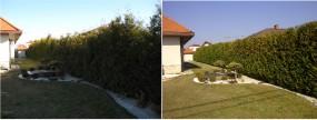 Przycinanie żywopłotów - SDS Ogród Dariusz Suprun Ruda-Huta