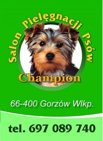 Psi Fryzjer Gorzow Wlkp Strzelce Krajenskie Salon Pielęgnacji Psów