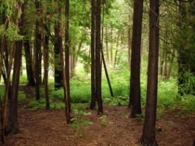 Wycena nieruchomości rolnych i leśnych - Kancelaria Majątkowa ESTIMA Malbork