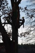 wycinka drzew techniką alpinistyczną - Paweł Wojtysiak Drzewa i Ogrody Kisielice