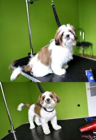 Psi Fryzjer Strzyżenie I Trymowanie Psów Salon Pielęgnacji Psów