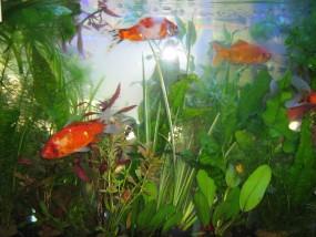 ryby do oczka wodnego jasło krosno sanok besko - Gruszka Witold - Sklep zoologiczny Jasło