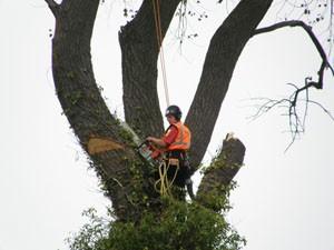 Wycinka drzew cennik wrocław