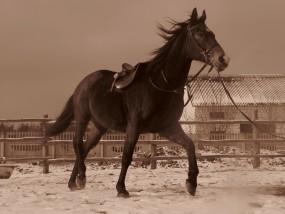 nauka jazdy konnej - Stajnia Pasada Królowa Wola