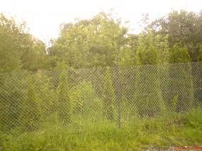 wycinka drzew Bielsko, Czechowice, Kozy, Kęty, Brzeszcze - Gartenmeister Pisarzowice