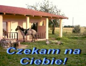 Nocleg - Terraja Drozdowo