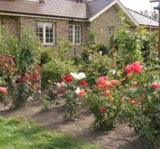 Pielęgnacja rabat kwiatowych - Azalia Pielęgnacja Ogrodów Domysłów