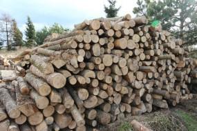 Jesion drewno opałowe kominkowe - Bh Constans Drewno Opałowe Kleosin