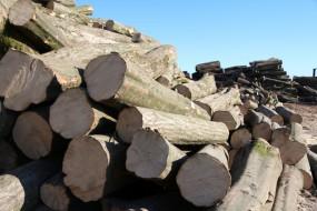grab drewno opałowe kominkowe - Bh Constans Drewno Opałowe Kleosin