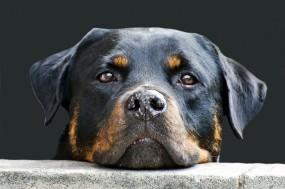 Karma dla psa - Coral-Bio - Sklep zoologiczny Dąbrowa Górnicza