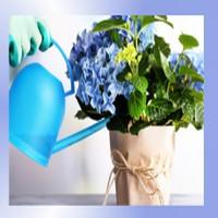 Pielęgnacja roślin w biurach - WYMARZONY OGRÓD Konin