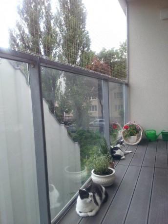 Siatka dla kota na balkon