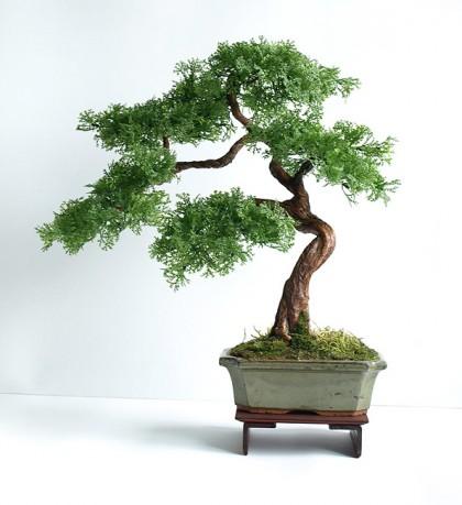 Sztuczne Drzewko Bonsai Bonsai Zokei Cedr 38cm Sztuczne Drzewka Bonsai