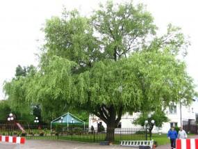 791534398 - Zielona ekipa Częstochowa