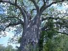 Wycinka drzew - ARBOR Zakład Pielęgnacji Zieleni,Drzew Wrocław