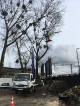 Wycinanie i przycinanie drzew metodą alpinistyczną - AMIGO Joanna Sokołowska Rumia