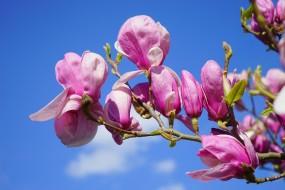 Dekoracja sal weselnych - Magnolia - Kwiaciarnia Tychy
