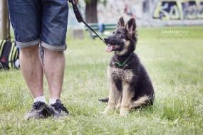Psie Przedszkole - APORT Szkolenie Psów Marita Ajnbacher Kiełczów