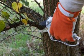 Przycinanie drzew i krzewów - Antoś Usługi Ogrodnicze Rzeszów