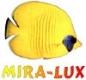 MIRA-LUX International Ltd Sp. z o.o. Baseny Kąpielowe i Akcesoria