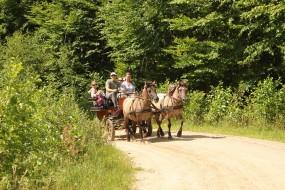 Przejażdżka bryczką ścieżką edukacyjną - Gospodarstwo Agroturystyczne Lobelia Bytów
