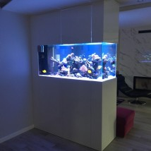 akwarystyka morska - Crazy Coral Bydgoszcz