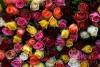 Rybak Teresa - Kwiaciarnia