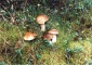 Lipnica Noclegi w agroturystyce - Agroturystyka Na Kaszubach