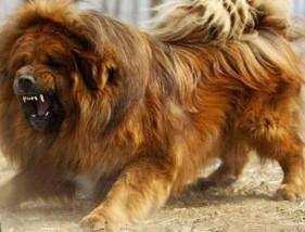 Resocjalizacja niesfornych psów - Mobilna Pielęgnacja Psów Chrząstowice