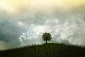 Terapia uzależnień i współuzależnień - Psychoterapia mgr Alicja Jaszczyńska Kołobrzeg