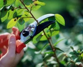 Pielęgnacja roślin - Projekt DARMA Dariusz Ziemski Kluczbork