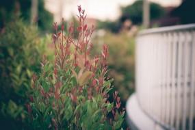 Projetowanie ogrodów - Natura & Człowiek Twoje Centrum Ogrodnicze Koziegłowy