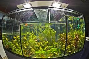 Lotus, Cabomba, Anubias, - Sklep Zoologiczno - Wędkarski Oświęcim BORMAG Oświęcim