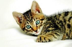 Karma dla kota - PetShopGirls Sklep Zoologiczny Kłomnice