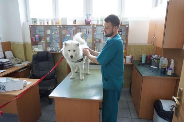 Fryzjer Dla Psów I Kotów Bafir Specjalistyczna Przychodnia