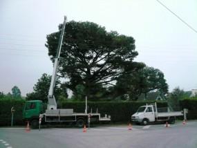 Wycinka drzew przycinanie obcinanie gałęzi Mycie elewacji okien - Konserwacja Urządzeń Dźwigowych. Usługi Dźwigowe Karol Miśkiewicz Zduńska Wola