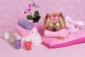SALON PSIEJ ODNOWY - TOFIK Salon fryzjerski dla psów Wioletta Baryła Piekary Śląskie