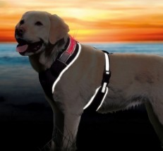 Szelki dla psa - F.H.U. VERONA Malbork