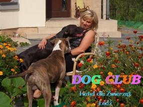 Opieka nad zwierzętami - pensjonat dla psów - Hotel dla Zwierząt DOG CLUB  tel.698466060 Bedoń Przykościelny