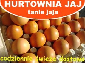 Jaja kurze - Hurtownia Jaj Poznań