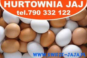 Jaja od kur z wolnego wybiegu - Hurtownia Jaj Poznań Poznań