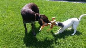 Opieka nad psami, szkolenia, pomoc behawioralna - Ruffi Hotel dla Psów Nysa