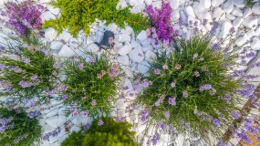 Sadzenie roślin ozdobnych - Ogrody Breczko Białystok