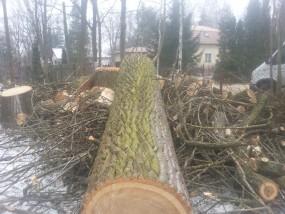 wycinka drzew - JUMPER Robercin
