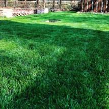 Zakładanie i pielęgnacja trawników - Mateusz Dekoruje Świnoujście