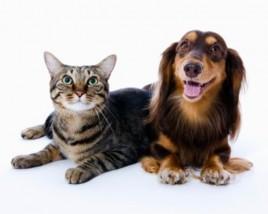 Usuwanie nieprzyjemnych zapachów, np. zwierzęcych - Czyszczenie dywanów i tapicerek Dr Plama Szczecin