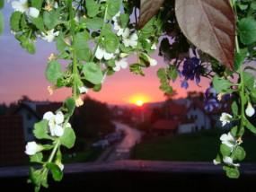 Pielęgnacja i zakładanie ogrodów - ABC Ogród Wieliczka