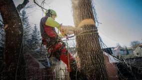 Arborystyka - Przycinanie Drzew - Domowa Wędzarnia - Swojskie Wędliny Jaworzyna Śląska