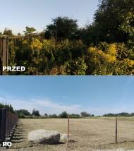 oczyszczanie działek - Platan Projekt Sosnowiec