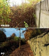 wycinka drzew i krzewów - Platan Projekt Sosnowiec